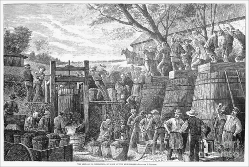 The Vintage in California: Line engraving, American, 1878.