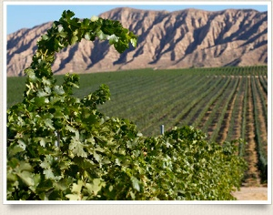 Santa Barbara Highlands Vineyard