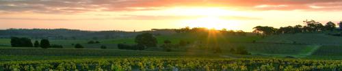 Wine Road 290
